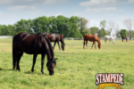 How to Stimulate a Horse's Appetite