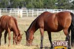 Cost-Effective Feeding Program for Horses