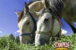 Horse Feed Value