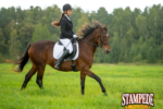 Heat Strokes in Horses