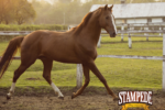 Exercising Adult Horses