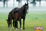Does Your Horse Get Gas Colic in the Springtime?