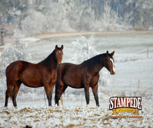 feeding horses in cold weather