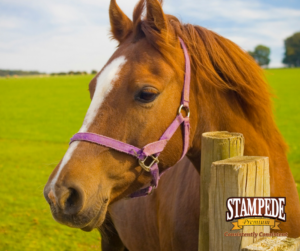 Horse Feed Tags