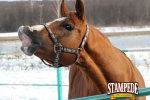 Winterize Your Horse
