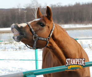 Steps to Winterize Your Horse