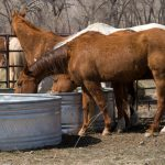 Summer Safety Tips for Horses