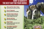 6 Signs of Quality Hay