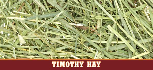 Timothy Hays