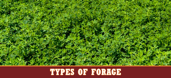 types of forage