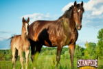 Get Ready for a Healthy Spring Foal Season