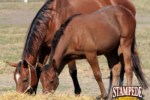The Importance of Hay Quality for Horses