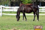 Skin Diseases in Horses